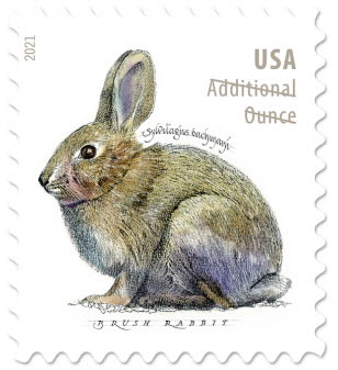 brush rabbit on stamp